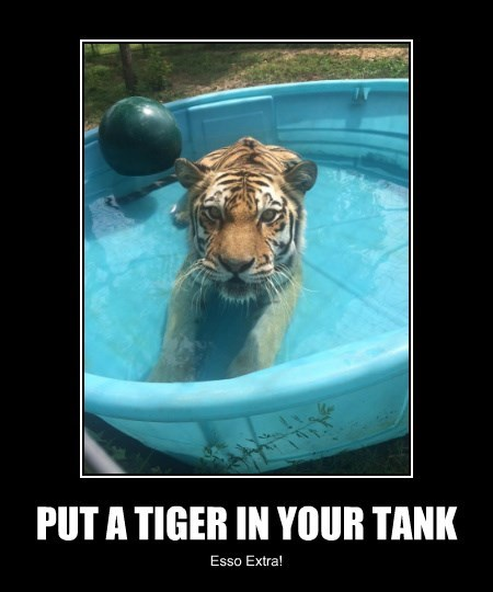 tiger,swimming pool,caption,Cats,funny
