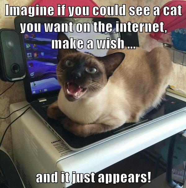 aww,cute,3-D,wish,caption,Cats