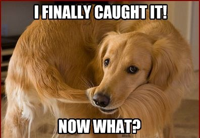 dogs,tail,caption,funny