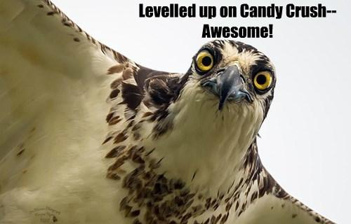candy crush bird video games funny - 8558641664