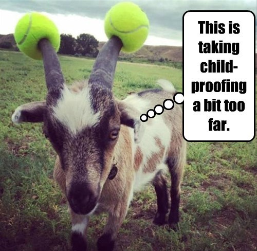 safety first goats tennis ball funny captions - 8558650368