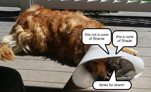 dogs cone of shame caption Cats funny - 8558698240