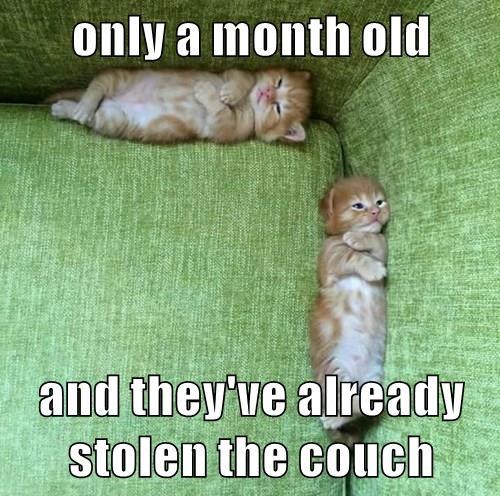 animals captions cute Cats - 8558703104