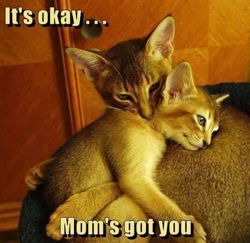 animals cat mama kitten comfort caption - 8558777344