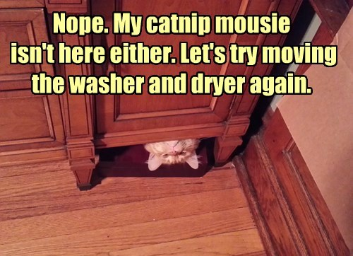 Nope. My catnip mousie isn't here either. Let's try moving the washer and dryer again.