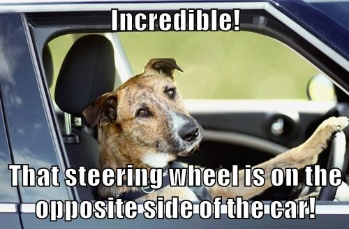 animals dogs driving caption funny