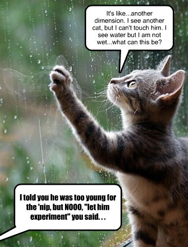 Funny Sayings About Too Much Rain   Get Funny Quote Says