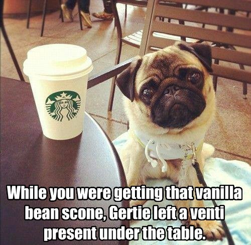 dogs accident Starbucks caption funny - 8558873856