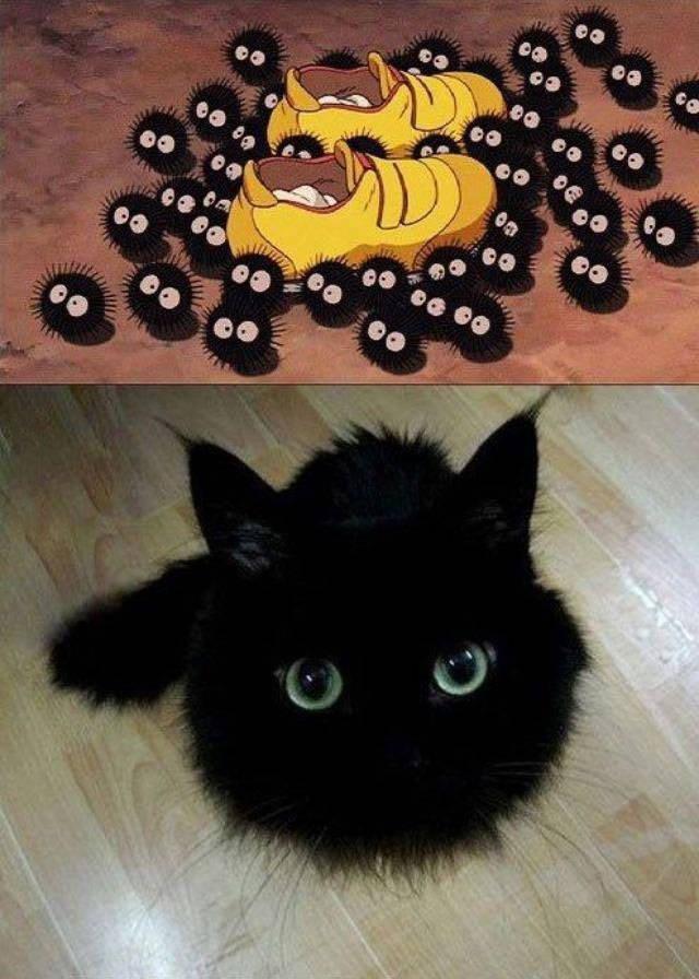 anime memes soot sprite cat