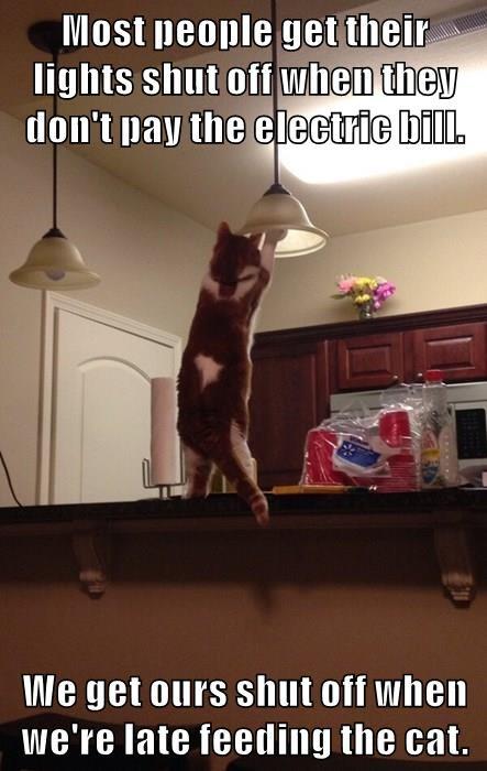 animals captions Cats funny - 8558939136