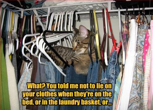 captions Cats funny - 8558956544