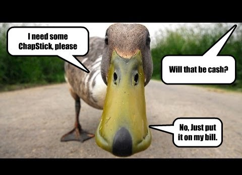 duck,captions,funny