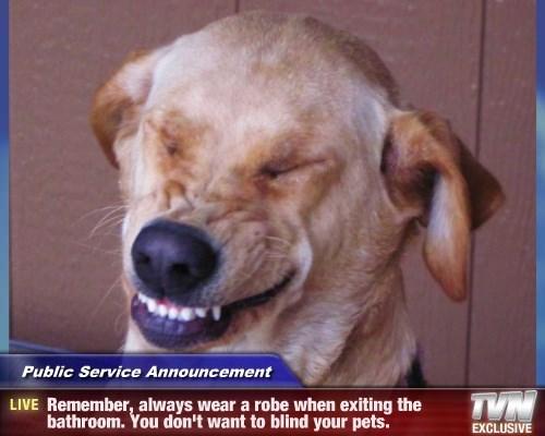 robe dogs pets wear blind caption - 8559040000