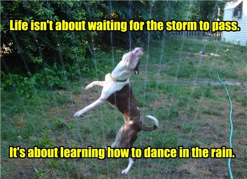 dogs,life,storm,dance,caption,rain