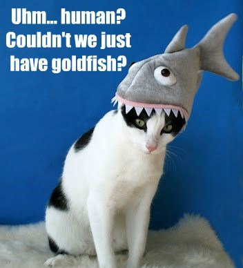 cat goldfish human caption - 8559055872