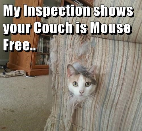 My Inspection shows your Couch is Mouse Free..