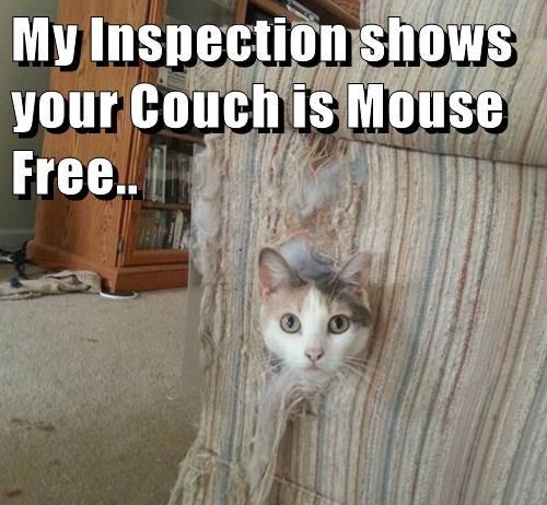 animals captions Cats funny - 8559133952
