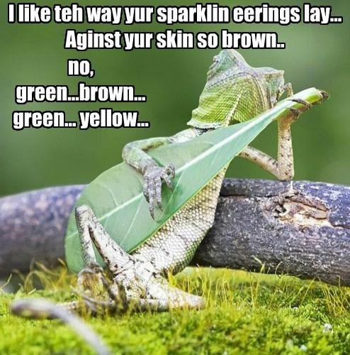 guitar,singing,chameleon,funny