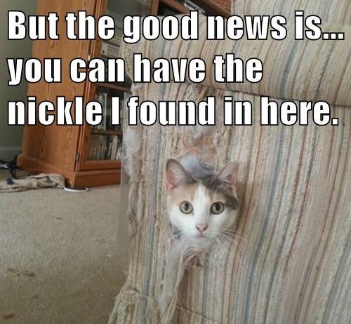 animals captions Cats funny - 8559175168