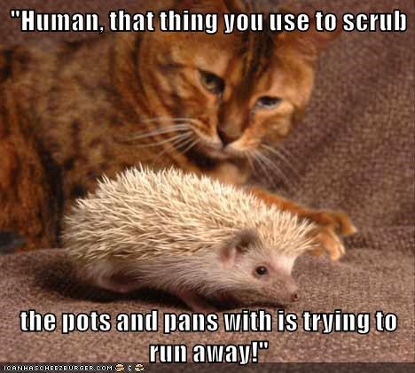 hedgehog,caption,Cats,funny