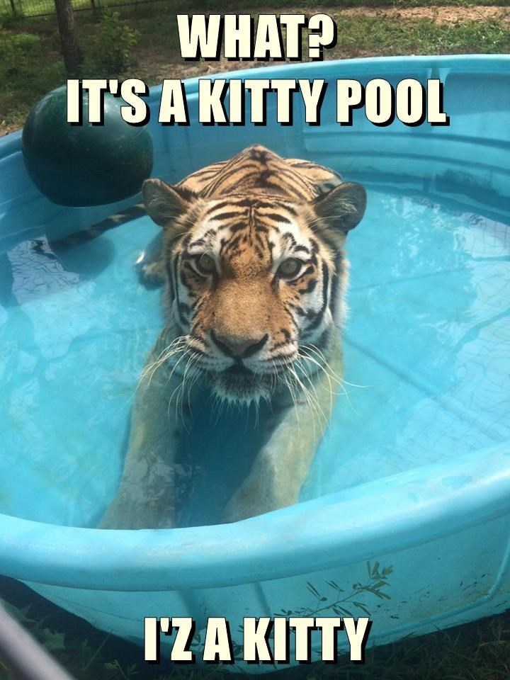WHAT?                                               IT'S A KITTY POOL  I'Z A KITTY