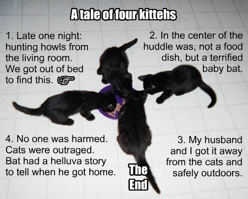 bats,true story,caption,Cats