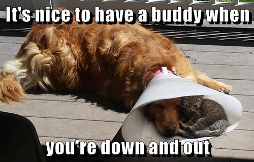 animals dogs cone of shame sweet caption Cats - 8559365888