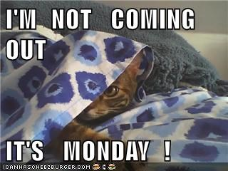 animals captions Cats funny - 8559367680