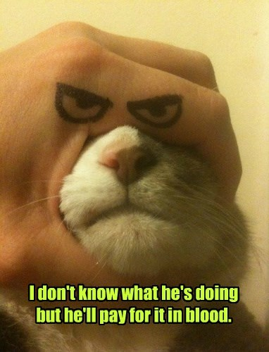 facial expressions caption Cats funny - 8559392000