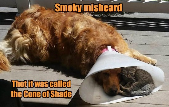 dogs captions Cats funny - 8559583744