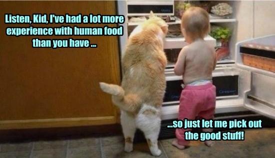 experience cat stuff food good caption - 8559691264
