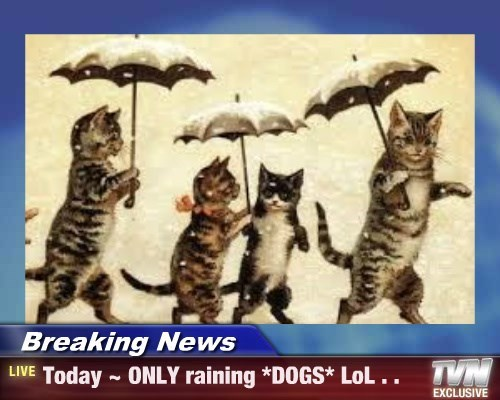 Breaking News - Today ~ ONLY raining *DOGS* LoL . .