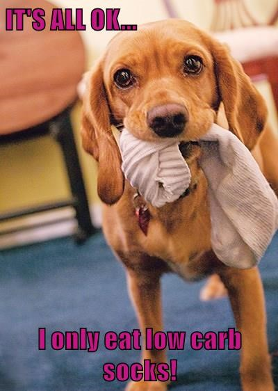animals dogs captions funny - 8559738880
