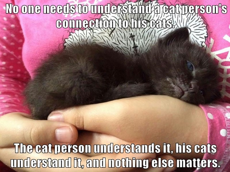 No one needs to understand a cat person's connection to his cats.  The cat person understands it, his cats understand it, and nothing else matters.