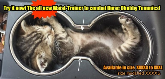 Try it now! The all new Waist-Trainer to combat those Chubby Tummies!