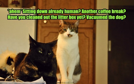 *ahem* Sitting down already human? Another coffee break? Have you cleaned out the litter box yet? Vacuumed the dog?