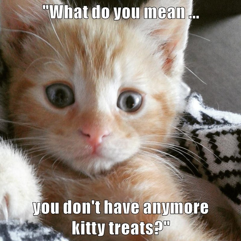 """""""What do you mean ...  you don't have anymore                          kitty treats?"""""""