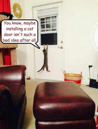 You know, maybe installing a cat door isn't such a bad idea after all.