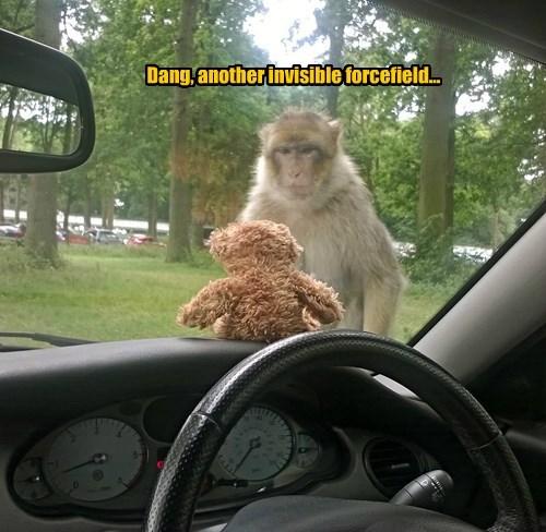 captions funny monkey - 8559989504