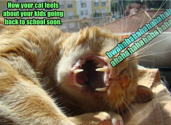 How your cat feels about your kids going back to school soon.