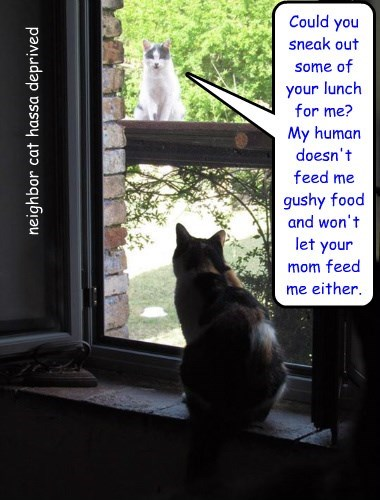 neighbor cat hassa deprived