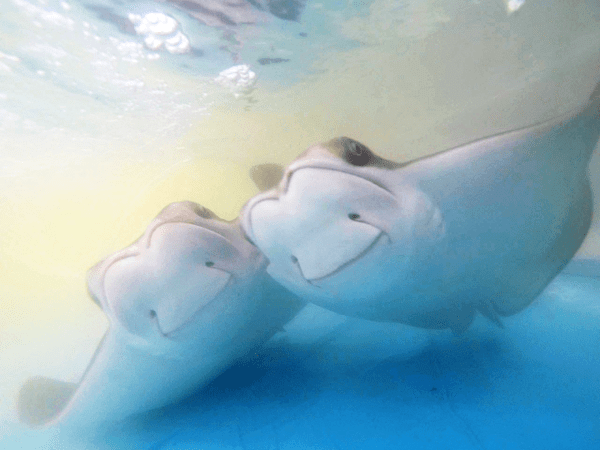 cute rays image Rays With Permanent Smiles