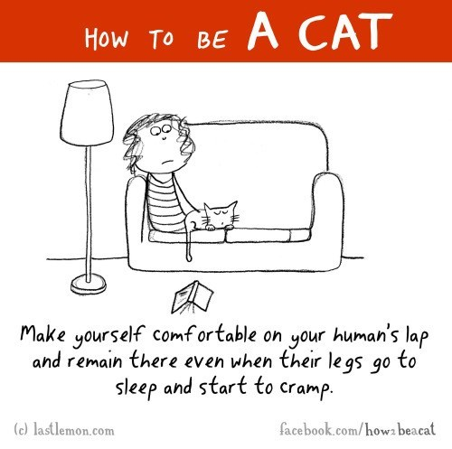 funny-web-comics-how-to-be-a-cat