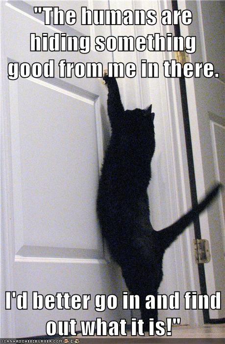 animals captions Cats funny - 8560085248