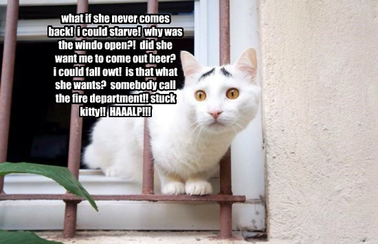 what if she never comes back!  i could starve!  why was the windo open?!  did she want me to come out heer?      i could fall owt!  is that what she wants?  somebody call the fire department!! stuck kitty!!  HAAALP!!!