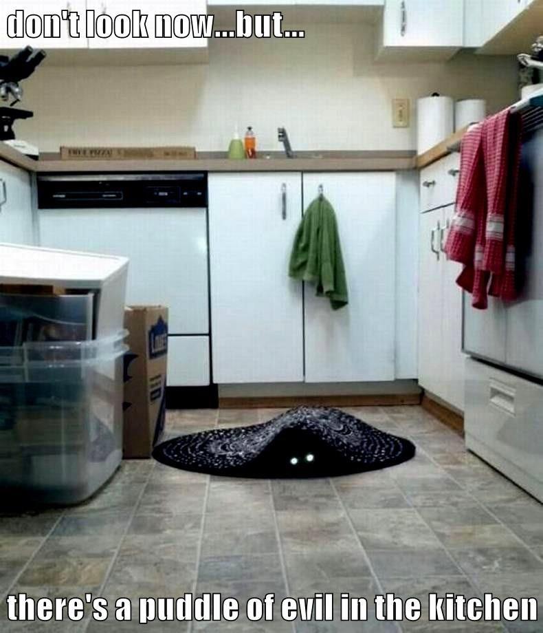 animals captions Cats funny - 8560160512