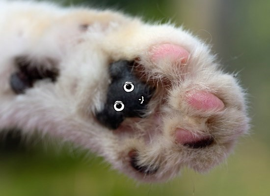 paws,teddy bear,cute,caption,Cats,funny