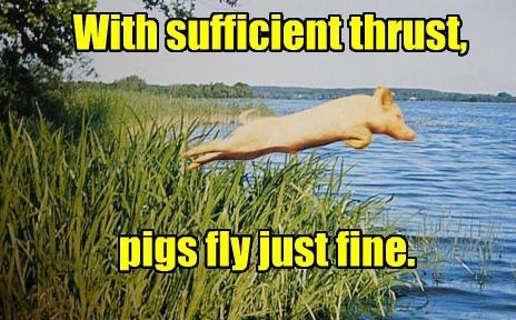 pig captions funny - 8560219392