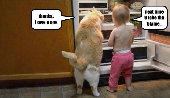 buddy caption Cats funny - 8560318976