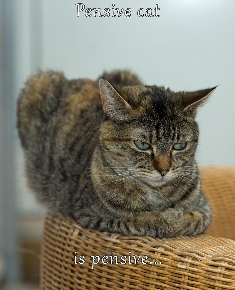 Pensive cat  is pensive...